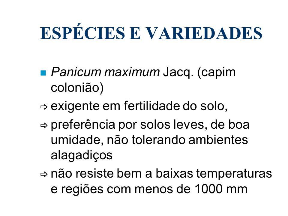 ESPÉCIES E VARIEDADES n Panicum maximum Jacq. (capim colonião) exigente em fertilidade do solo, preferência por solos leves, de boa umidade, não toler