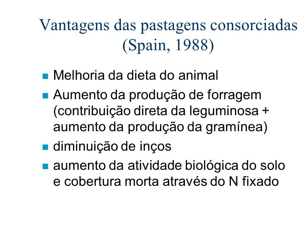 Vantagens das pastagens consorciadas (Spain, 1988) n Melhoria da dieta do animal n Aumento da produção de forragem (contribuição direta da leguminosa
