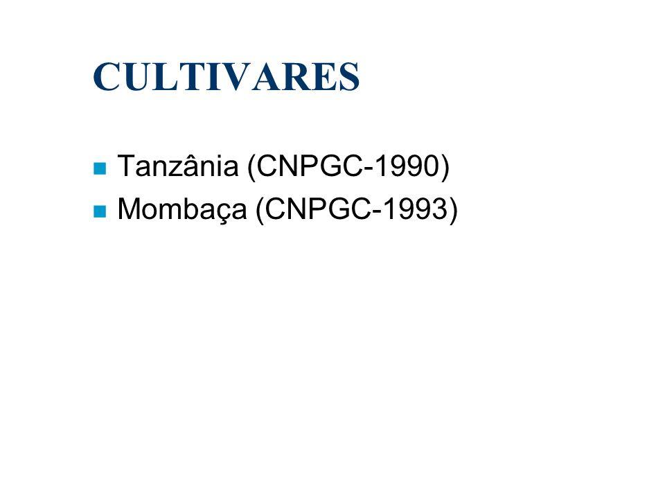 n Tanzânia (CNPGC-1990) n Mombaça (CNPGC-1993) CULTIVARES