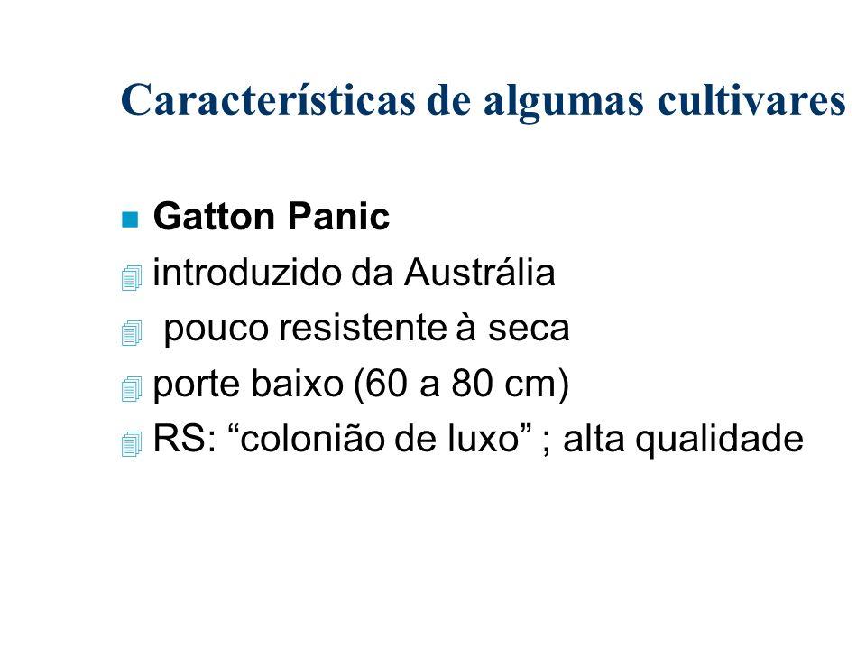 Características de algumas cultivares n Gatton Panic 4 introduzido da Austrália 4 pouco resistente à seca 4 porte baixo (60 a 80 cm) 4 RS: colonião de