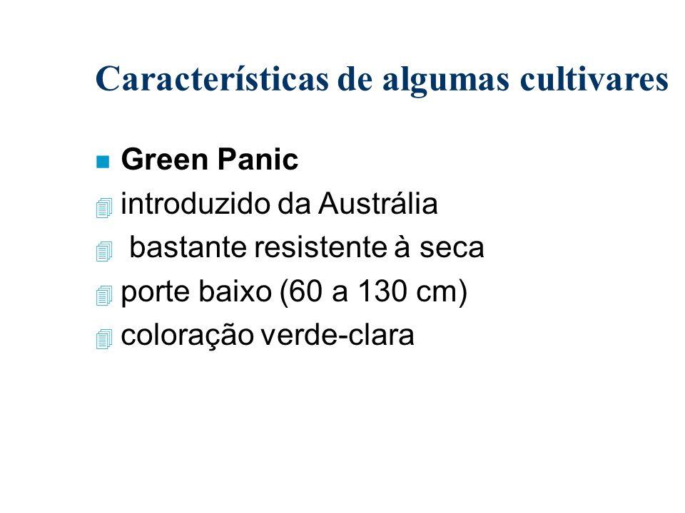 Características de algumas cultivares n Green Panic 4 introduzido da Austrália 4 bastante resistente à seca 4 porte baixo (60 a 130 cm) 4 coloração ve