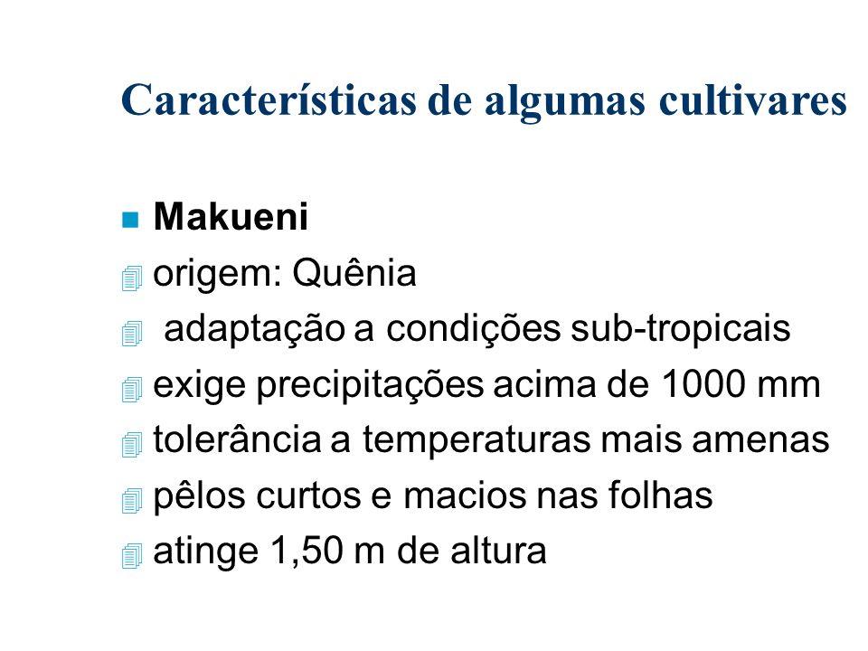 Características de algumas cultivares n Makueni 4 origem: Quênia 4 adaptação a condições sub-tropicais 4 exige precipitações acima de 1000 mm 4 tolerâ