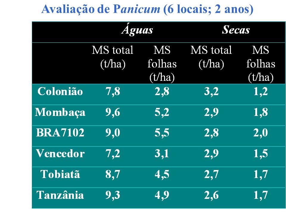 Avaliação de Panicum (6 locais; 2 anos)