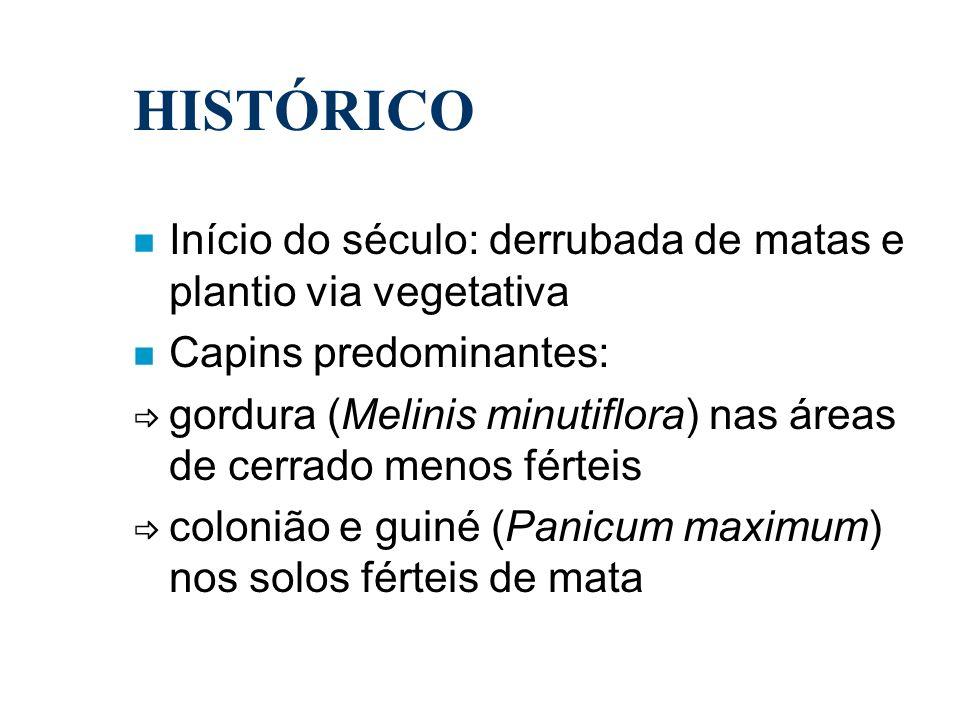HISTÓRICO n Início do século: derrubada de matas e plantio via vegetativa n Capins predominantes: gordura (Melinis minutiflora) nas áreas de cerrado m