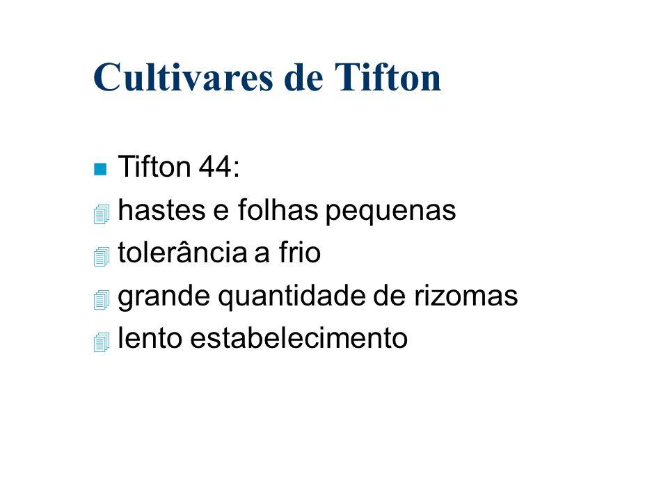 Cultivares de Tifton n Tifton 44: 4 hastes e folhas pequenas 4 tolerância a frio 4 grande quantidade de rizomas 4 lento estabelecimento