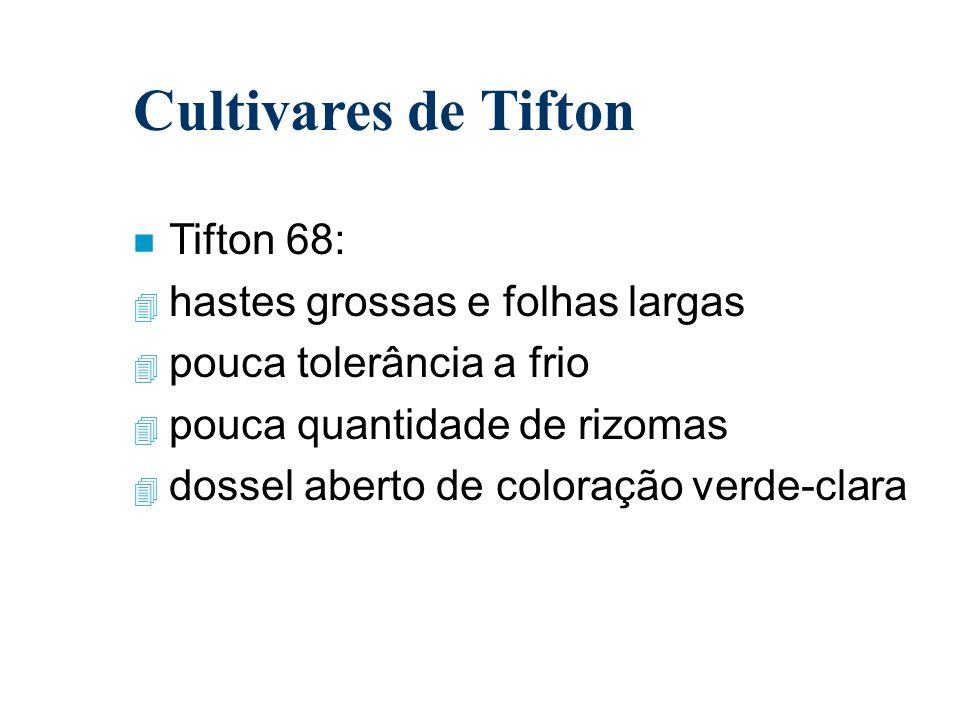 Cultivares de Tifton n Tifton 68: 4 hastes grossas e folhas largas 4 pouca tolerância a frio 4 pouca quantidade de rizomas 4 dossel aberto de coloraçã
