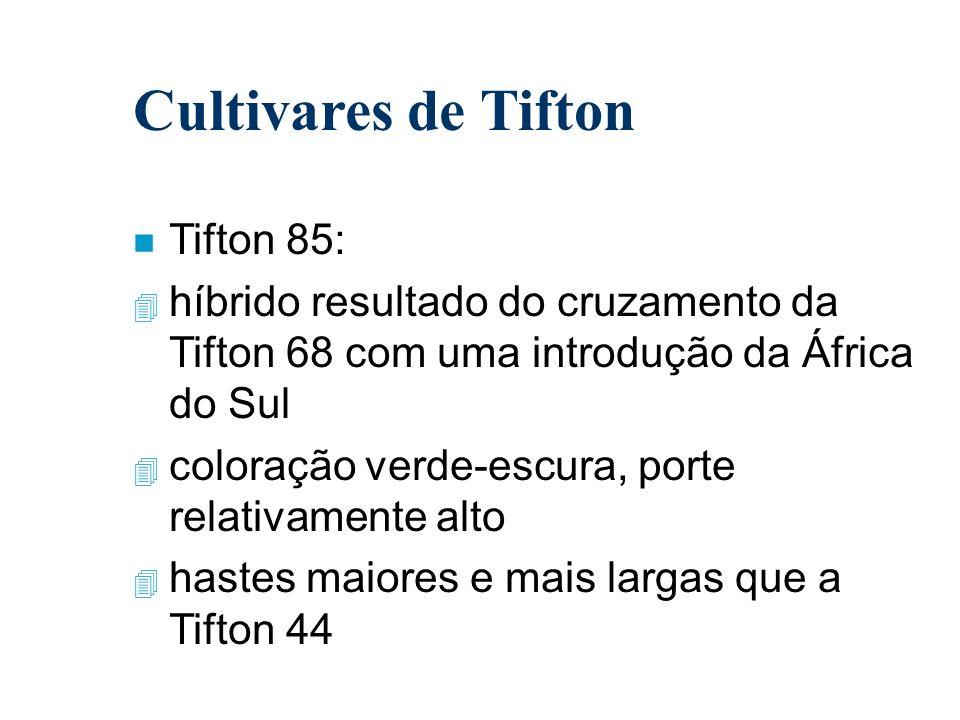 Cultivares de Tifton n Tifton 85: 4 híbrido resultado do cruzamento da Tifton 68 com uma introdução da África do Sul 4 coloração verde-escura, porte r