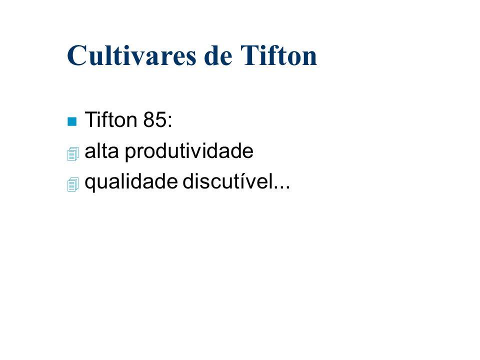 Cultivares de Tifton n Tifton 85: 4 alta produtividade 4 qualidade discutível...