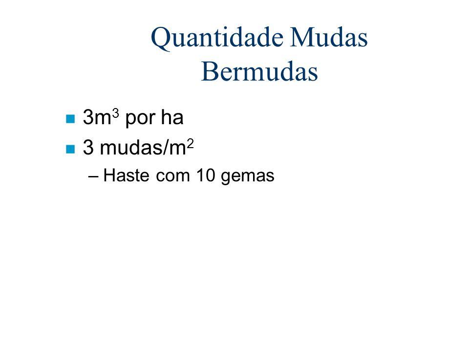 Quantidade Mudas Bermudas n 3m 3 por ha n 3 mudas/m 2 –Haste com 10 gemas