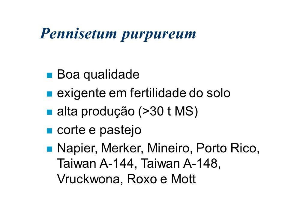 Pennisetum purpureum n Boa qualidade n exigente em fertilidade do solo n alta produção (>30 t MS) n corte e pastejo n Napier, Merker, Mineiro, Porto R