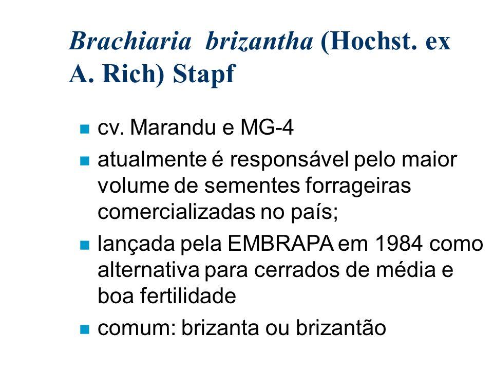 Brachiaria brizantha (Hochst. ex A. Rich) Stapf n cv. Marandu e MG-4 n atualmente é responsável pelo maior volume de sementes forrageiras comercializa