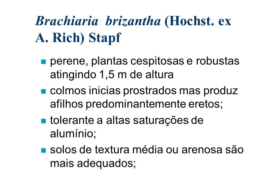 Brachiaria brizantha (Hochst. ex A. Rich) Stapf n perene, plantas cespitosas e robustas atingindo 1,5 m de altura n colmos inicias prostrados mas prod
