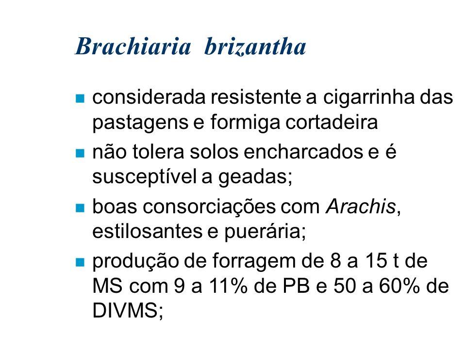 Brachiaria brizantha n considerada resistente a cigarrinha das pastagens e formiga cortadeira n não tolera solos encharcados e é susceptível a geadas;