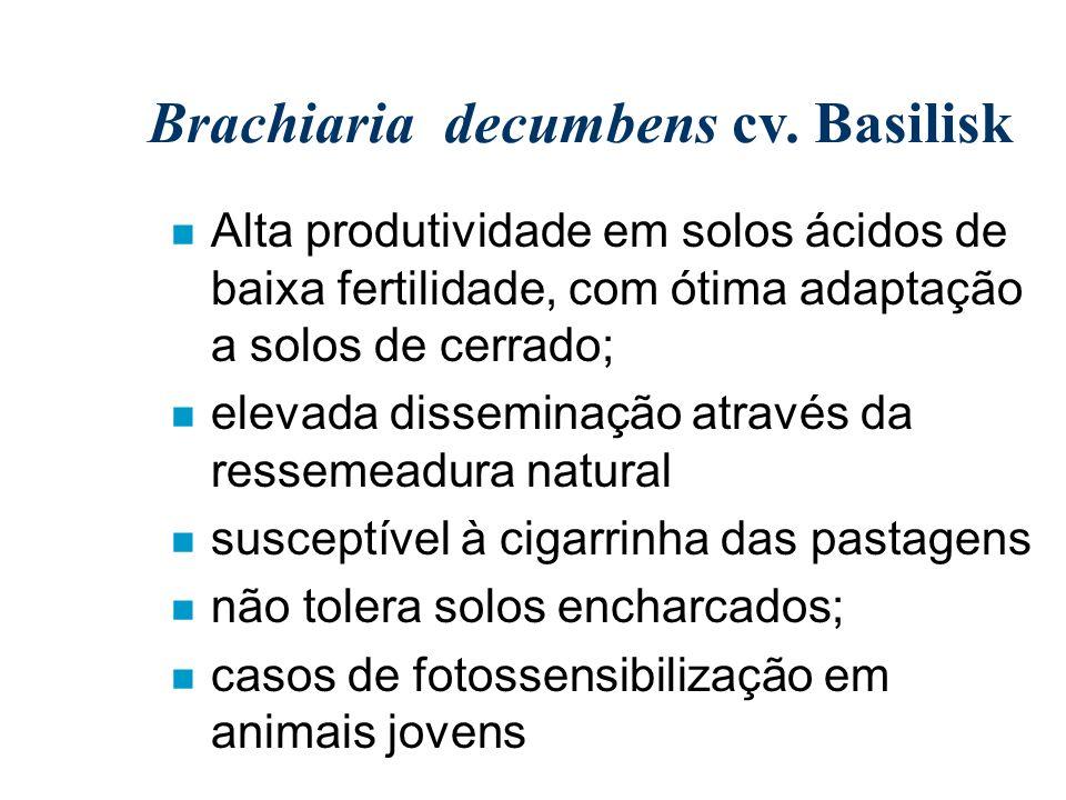 Brachiaria decumbens cv. Basilisk n Alta produtividade em solos ácidos de baixa fertilidade, com ótima adaptação a solos de cerrado; n elevada dissemi