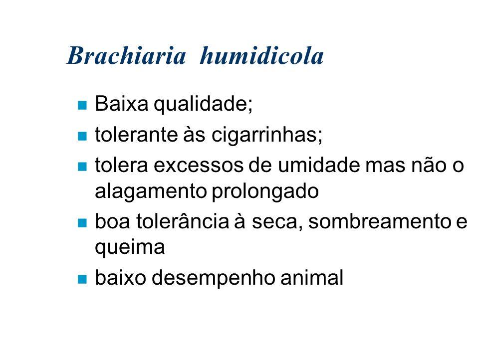 Brachiaria humidicola n Baixa qualidade; n tolerante às cigarrinhas; n tolera excessos de umidade mas não o alagamento prolongado n boa tolerância à s