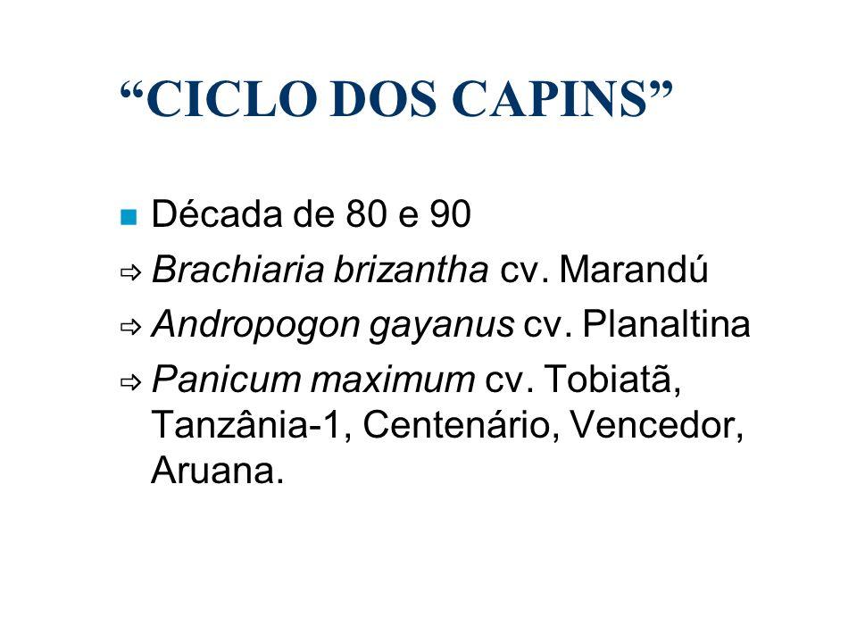 n Década de 80 e 90 Brachiaria brizantha cv. Marandú Andropogon gayanus cv. Planaltina Panicum maximum cv. Tobiatã, Tanzânia-1, Centenário, Vencedor,