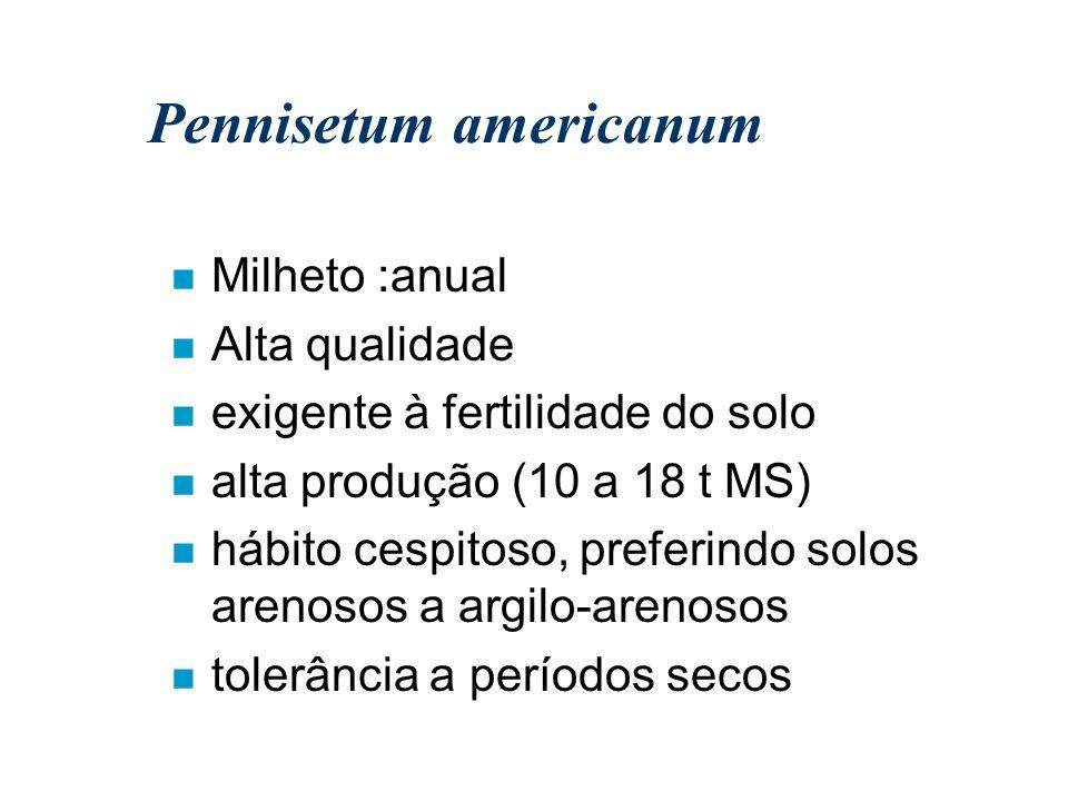 Pennisetum americanum n Milheto :anual n Alta qualidade n exigente à fertilidade do solo n alta produção (10 a 18 t MS) n hábito cespitoso, preferindo
