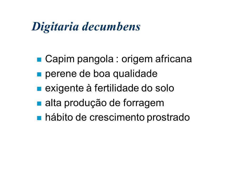 Digitaria decumbens n Capim pangola : origem africana n perene de boa qualidade n exigente à fertilidade do solo n alta produção de forragem n hábito