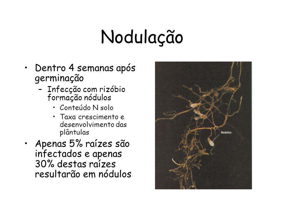 Nodulação Dentro 4 semanas após germinação –Infecção com rizóbio formação nódulos Conteúdo N solo Taxa crescimento e desenvolvimento das plântulas Ape
