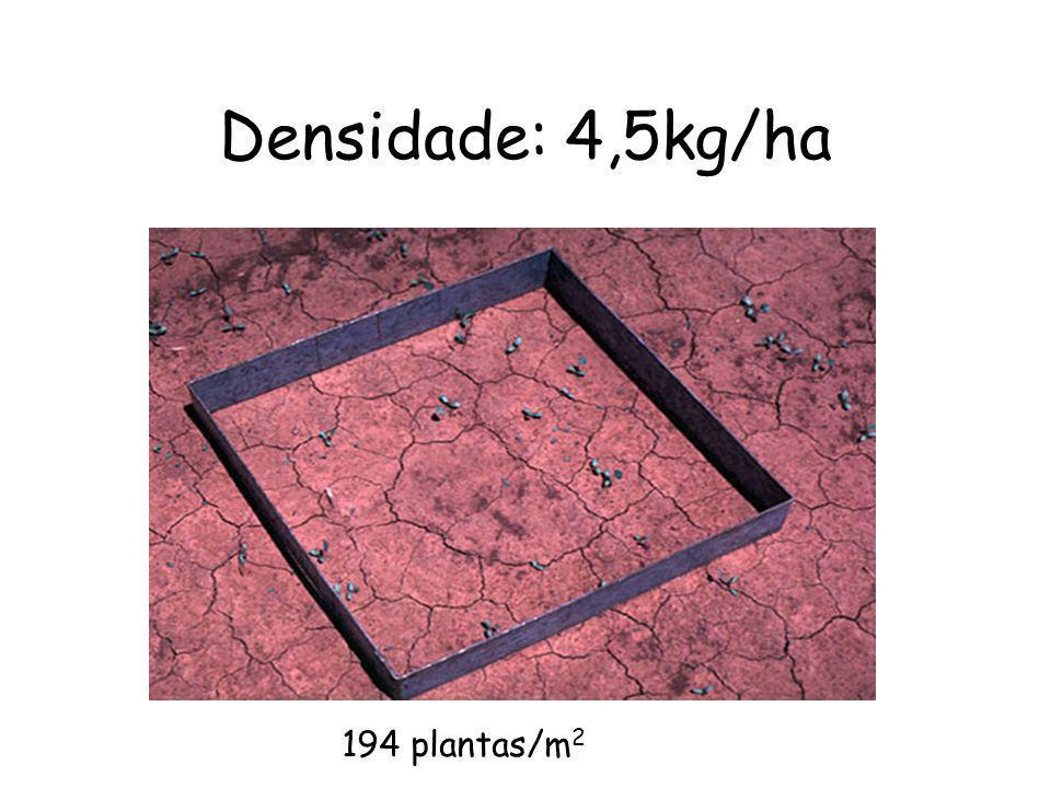 Densidade: 4,5kg/ha 194 plantas/m 2