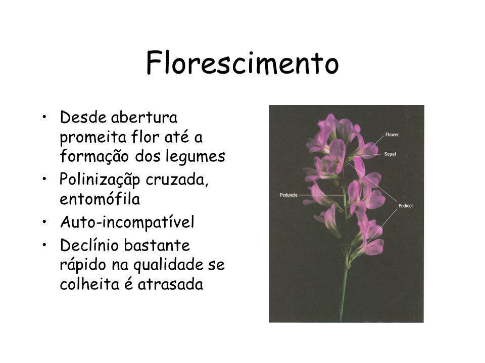 Florescimento Desde abertura promeita flor até a formação dos legumes Polinizaçãp cruzada, entomófila Auto-incompatível Declínio bastante rápido na qu