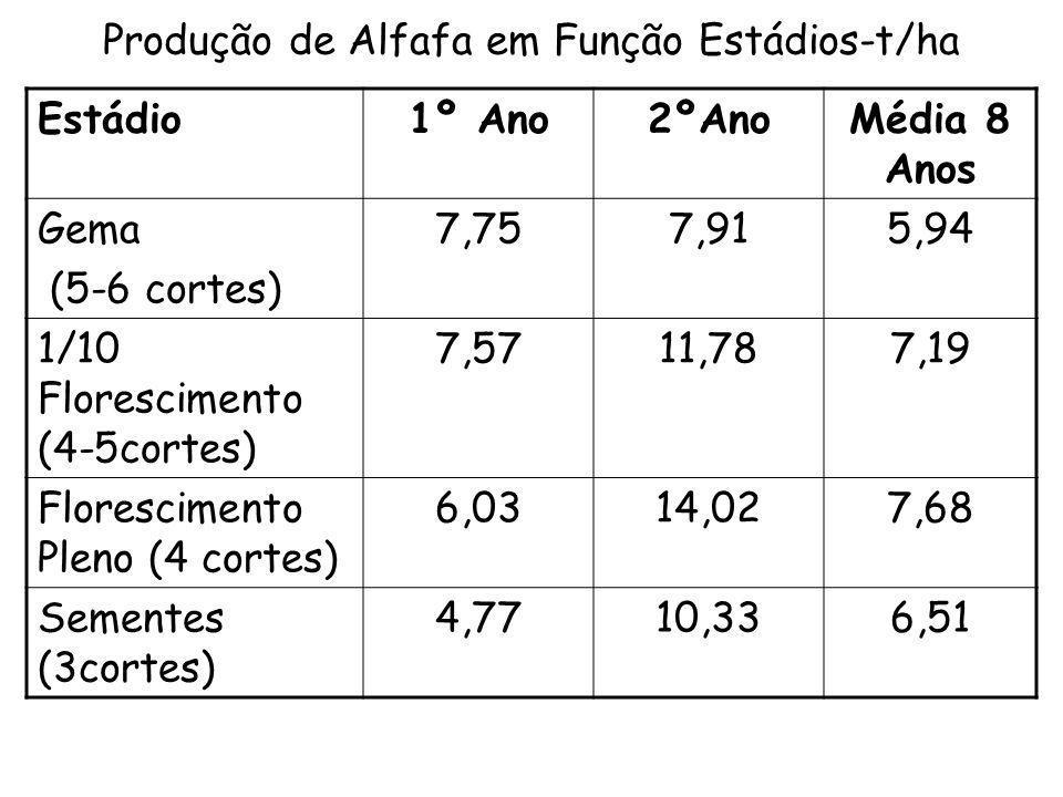 Produção de Alfafa em Função Estádios-t/ha Estádio1º Ano2ºAnoMédia 8 Anos Gema (5-6 cortes) 7,757,915,94 1/10 Florescimento (4-5cortes) 7,5711,787,19