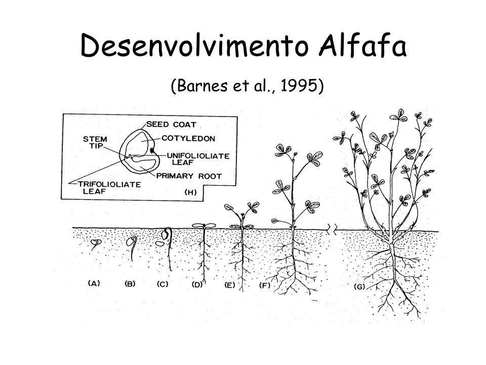 Desenvolvimento Alfafa (Barnes et al., 1995)