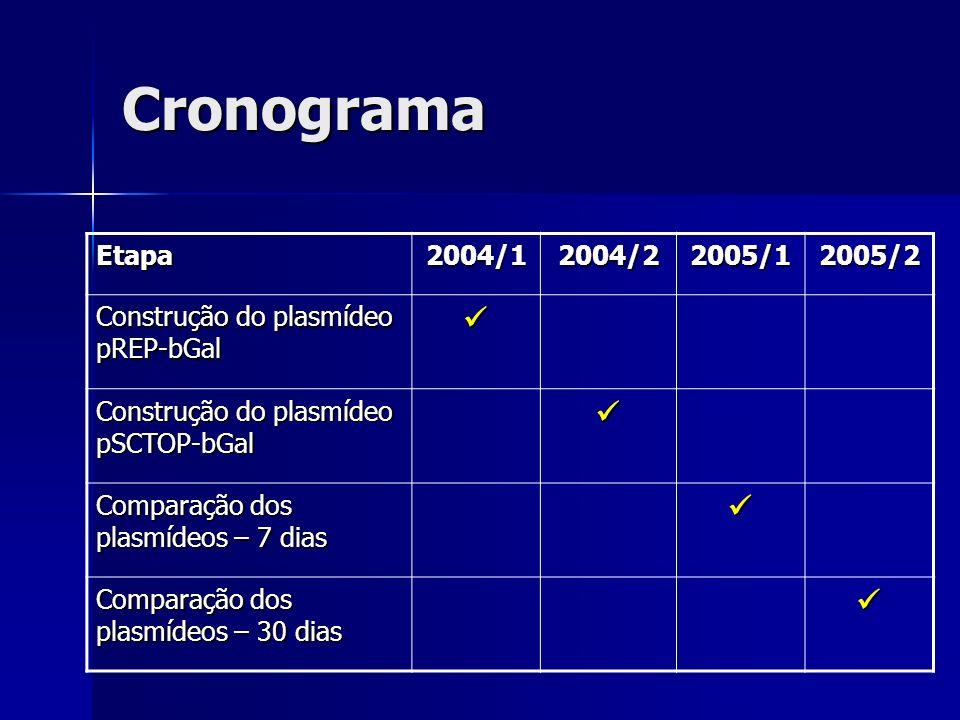 Cronograma Etapa2004/12004/22005/12005/2 Construção do plasmídeo pREP-bGal Construção do plasmídeo pSCTOP-bGal Comparação dos plasmídeos – 7 dias Comp