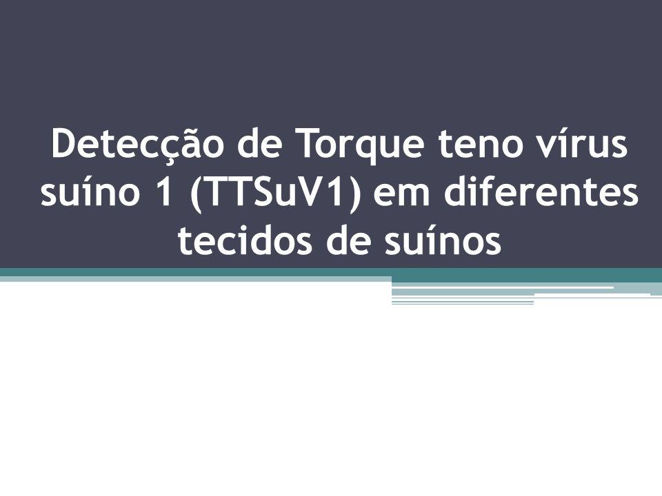 Detecção de Torque teno vírus suíno 1 (TTSuV1) em diferentes tecidos de suínos