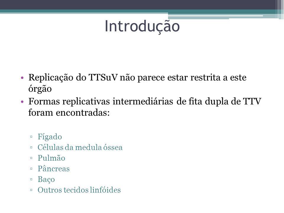 Introdução Replicação do TTSuV não parece estar restrita a este órgão Formas replicativas intermediárias de fita dupla de TTV foram encontradas: Fígad