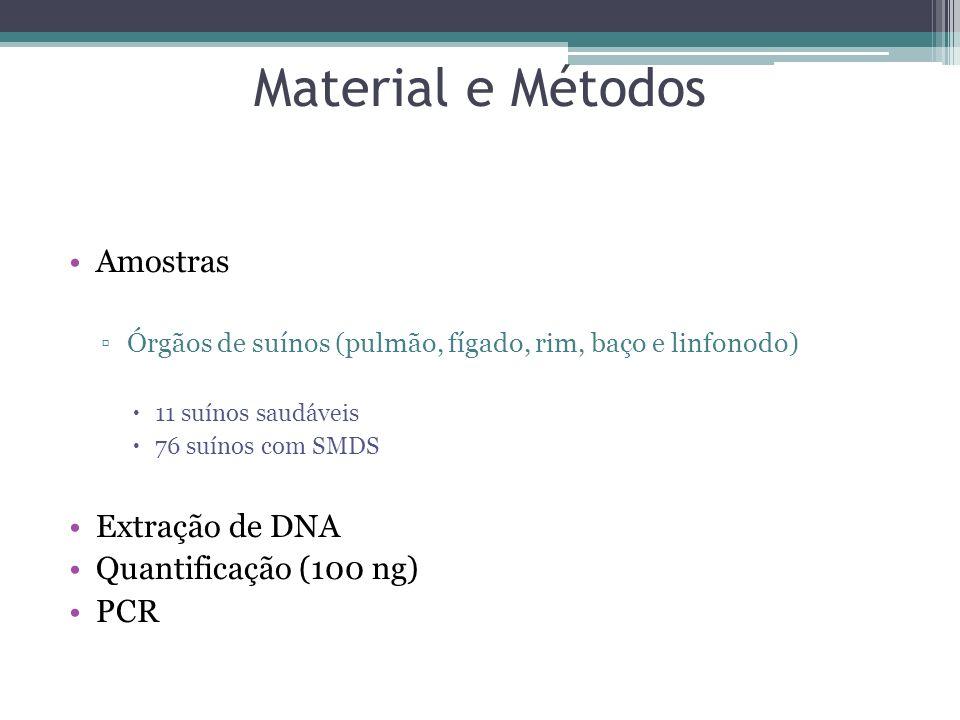 Material e Métodos Amostras Órgãos de suínos (pulmão, fígado, rim, baço e linfonodo) 11 suínos saudáveis 76 suínos com SMDS Extração de DNA Quantifica