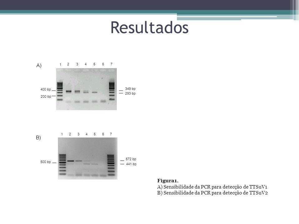 Resultados 234567 1 200 bp 400 bp 349 bp 293 bp 1 234567 500 bp 572 bp 441 bp A) B) Figura1. A) Sensibilidade da PCR para detecção de TTSuV1 B) Sensib
