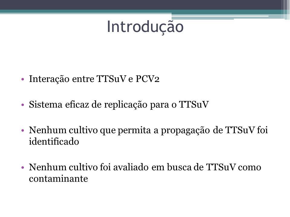 Introdução Interação entre TTSuV e PCV2 Sistema eficaz de replicação para o TTSuV Nenhum cultivo que permita a propagação de TTSuV foi identificado Ne