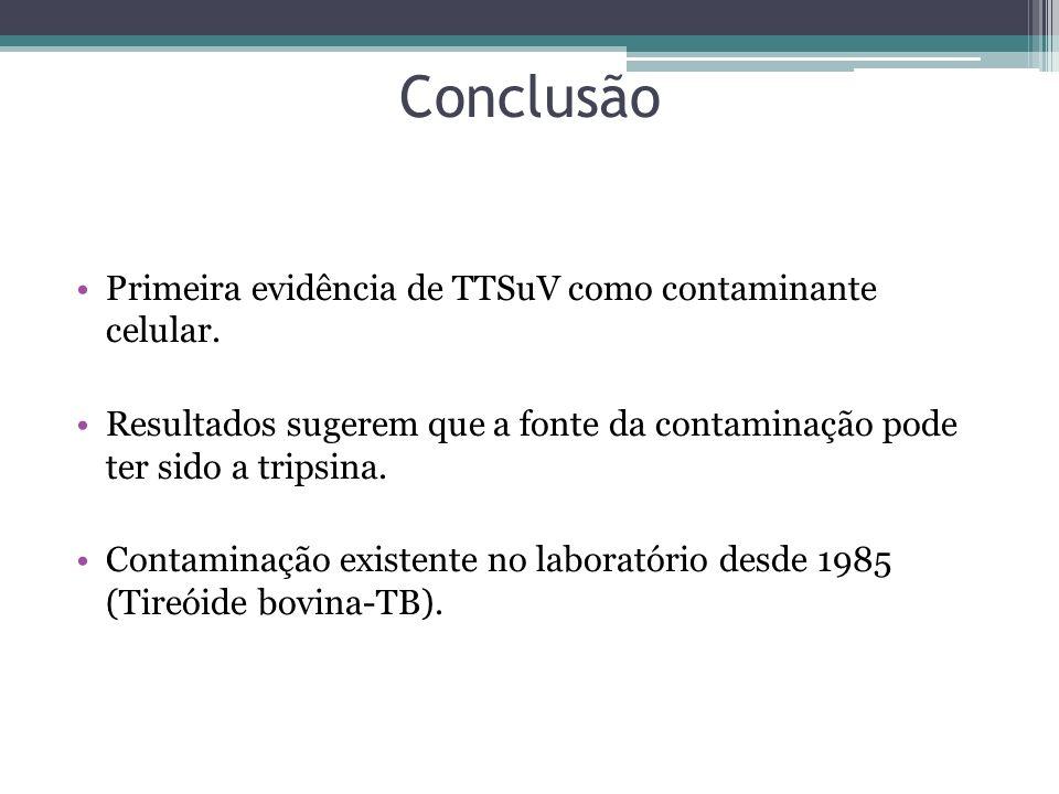 Conclusão Primeira evidência de TTSuV como contaminante celular. Resultados sugerem que a fonte da contaminação pode ter sido a tripsina. Contaminação