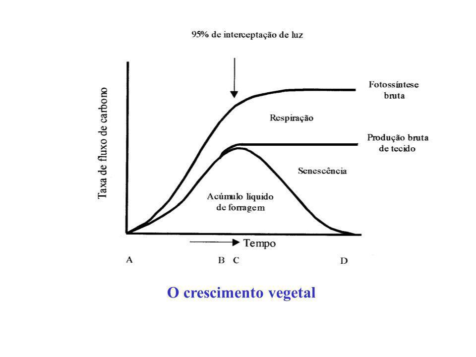 O crescimento vegetal
