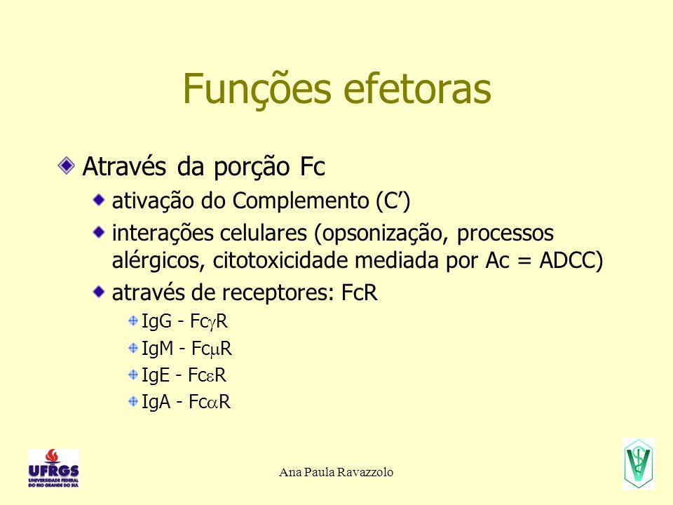 Ana Paula Ravazzolo Funções efetoras Através da porção Fc ativação do Complemento (C) interações celulares (opsonização, processos alérgicos, citotoxicidade mediada por Ac = ADCC) através de receptores: FcR IgG - Fc R IgM - Fc R IgE - Fc R IgA - Fc R