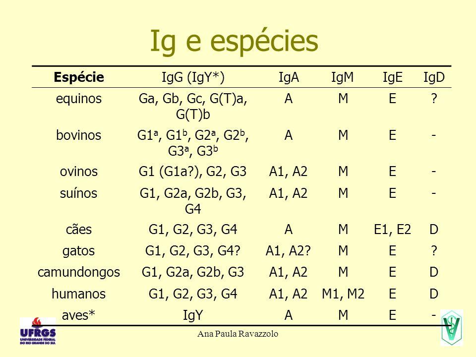Ana Paula Ravazzolo Ig e espécies EspécieIgG (IgY*)IgAIgMIgEIgD equinosGa, Gb, Gc, G(T)a, G(T)b AME? bovinosG1 a, G1 b, G2 a, G2 b, G3 a, G3 b AME- ov
