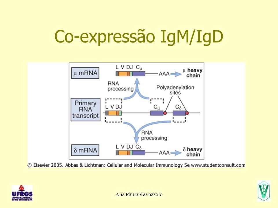Ana Paula Ravazzolo Co-expressão IgM/IgD