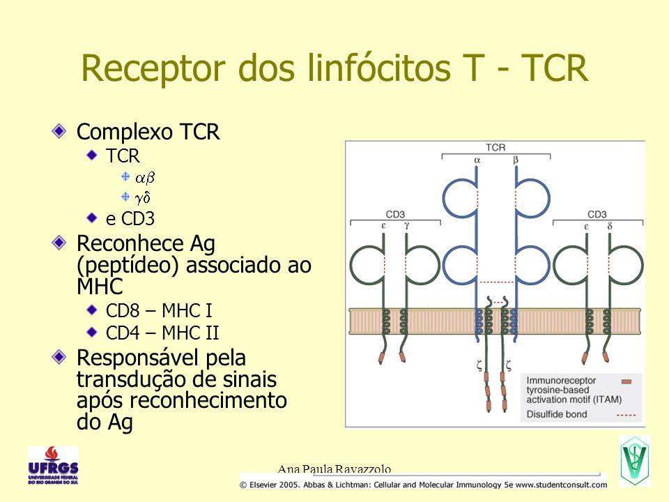 Ana Paula Ravazzolo Receptor dos linfócitos T - TCR Complexo TCR TCR e CD3 Reconhece Ag (peptídeo) associado ao MHC CD8 – MHC I CD4 – MHC II Responsável pela transdução de sinais após reconhecimento do Ag