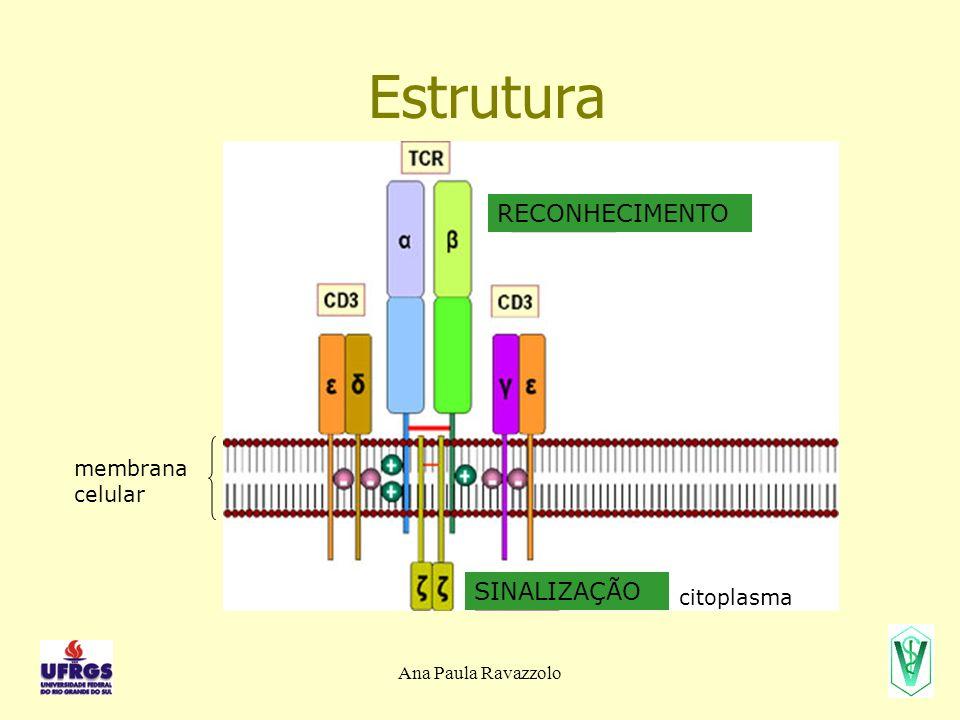 Ana Paula Ravazzolo Estrutura RECONHECIMENTO SINALIZAÇÃO membrana celular citoplasma