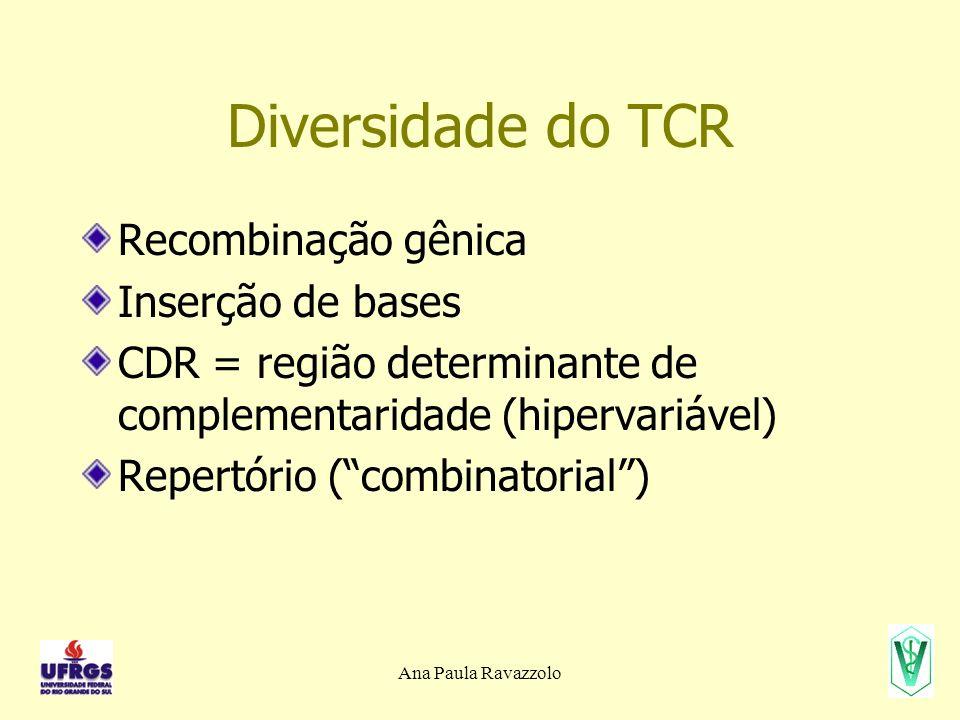 Diversidade do TCR Recombinação gênica Inserção de bases CDR = região determinante de complementaridade (hipervariável) Repertório (combinatorial)