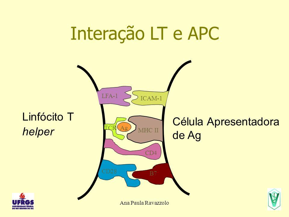 Interação LT e APC Linfócito T helper Célula Apresentadora de Ag MHC II ICAM-1 CD4 CD28 B7 LFA-1 TCRAg