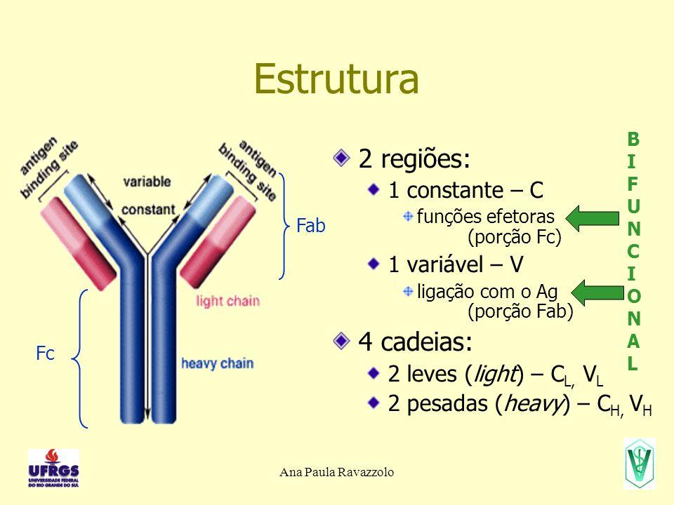 Ana Paula Ravazzolo Estrutura dos genes/TCR TCR: e cadeia cadeia segmentos V, J e C cadeia cadeia segmentos D Membro da superfamília (de proteínas) das Ig 1 segmento em e 2 segmentos em e