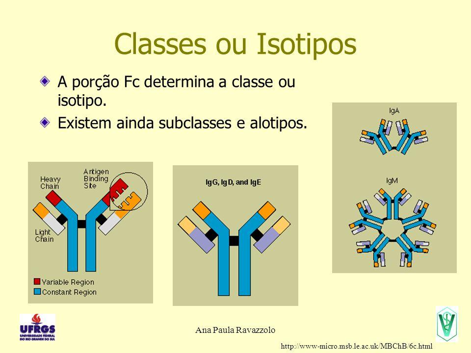 Ana Paula Ravazzolo Classes ou Isotipos A porção Fc determina a classe ou isotipo. Existem ainda subclasses e alotipos. http://www-micro.msb.le.ac.uk/