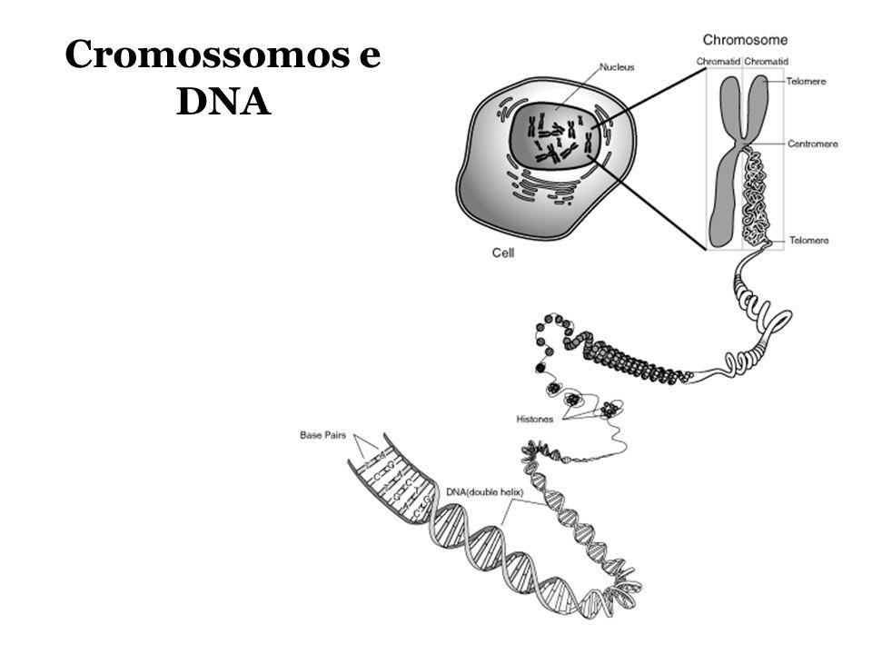 Cromossomos e DNA