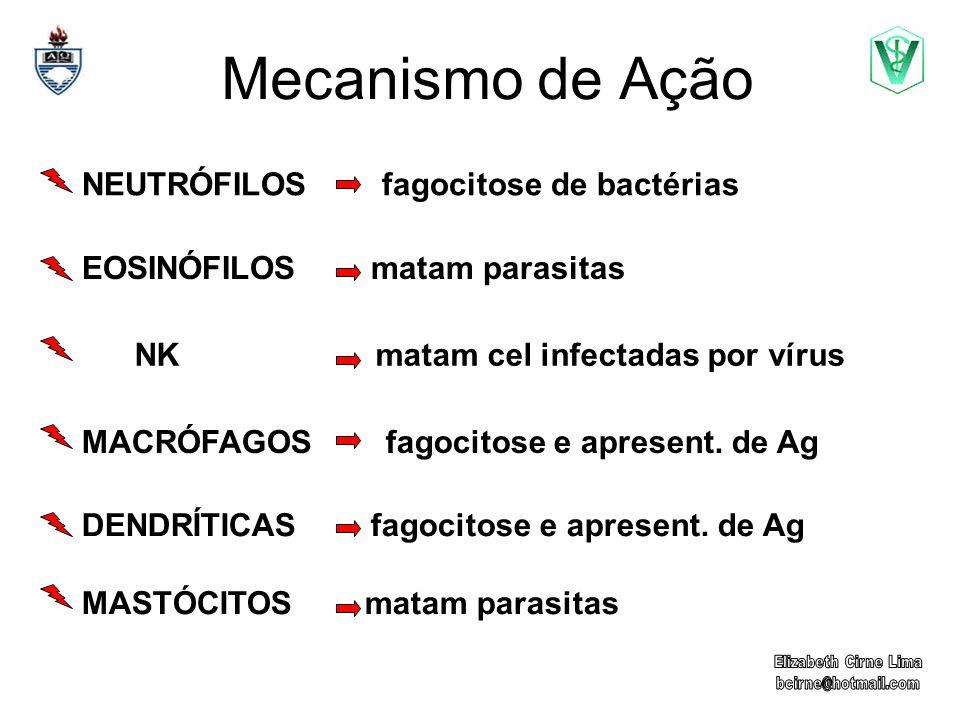 Mecanismo de Ação NEUTRÓFILOS fagocitose de bactérias EOSINÓFILOS matam parasitas NK matam cel infectadas por vírus MACRÓFAGOS fagocitose e apresent.