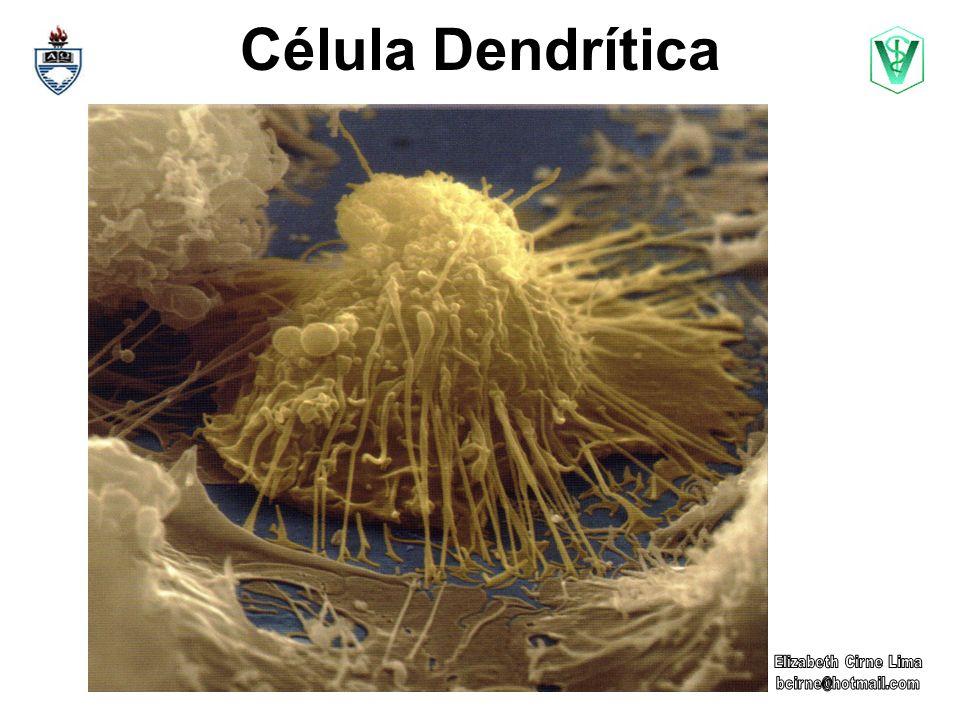 Célula Dendrítica