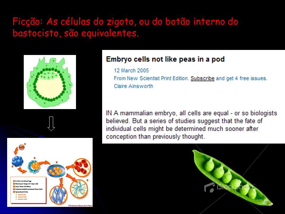 Ficção: As células do zigoto, ou do botão interno do bastocisto, são equivalentes.