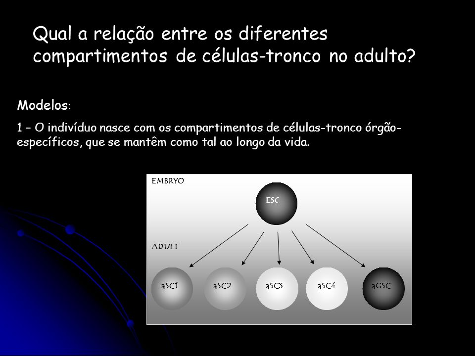 Qual a relação entre os diferentes compartimentos de células-tronco no adulto? Modelos : 1 – O indivíduo nasce com os compartimentos de células-tronco