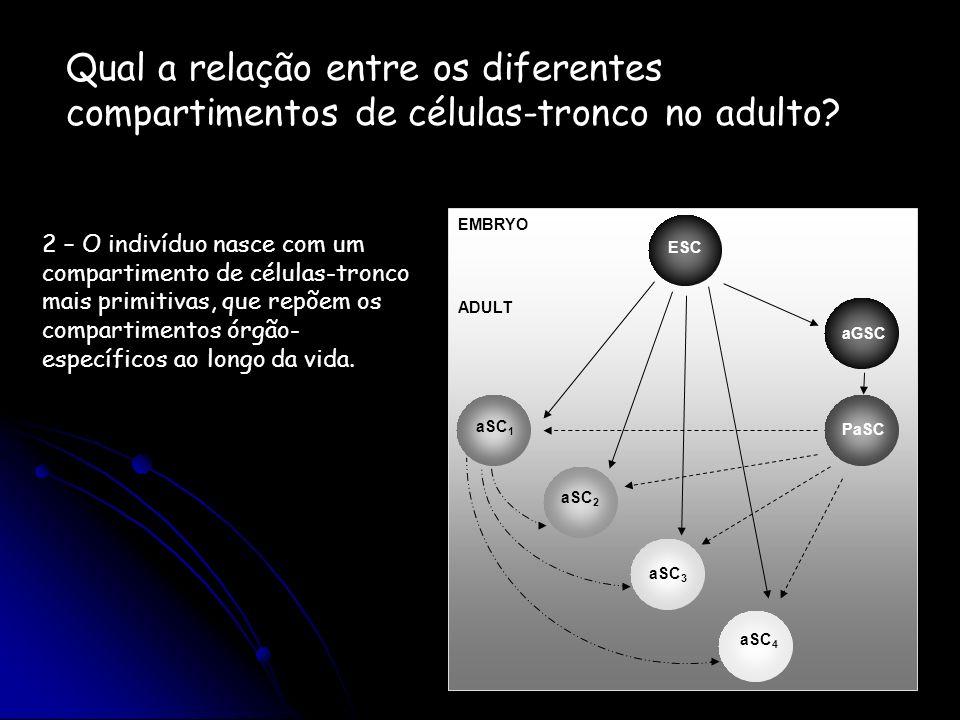 Qual a relação entre os diferentes compartimentos de células-tronco no adulto? 2 – O indivíduo nasce com um compartimento de células-tronco mais primi